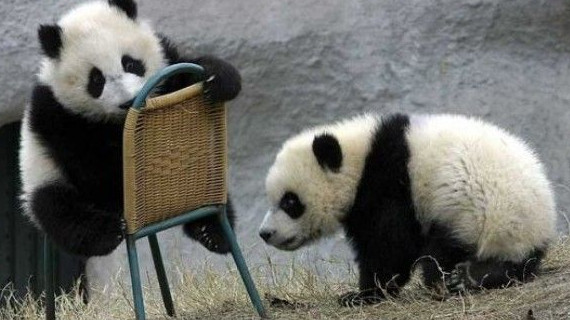 panda furniture