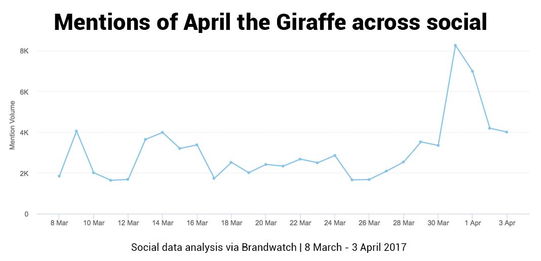 when will april the giraffe give birth